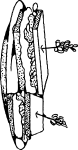 pobarvanke-hrana-03