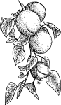 pobarvanke-hrana-10