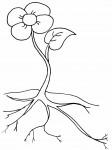pobarvanke-rastline-09