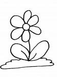 pobarvanke-rastline-10