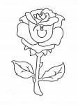 pobarvanke-rastline-12