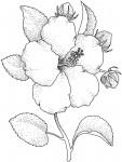 pobarvanke-rastline-15