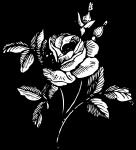 pobarvanke-rastline-44
