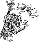 pobarvanke-vozila-04