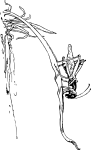 pobarvanke-zivali-23