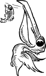 pobarvanke-zivali-25