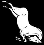pobarvanke-zivali-45