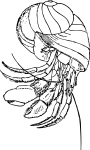 pobarvanke-zivali-47