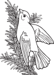pobarvanke-zivali-67
