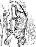 pobarvanke-zivali-71