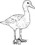 pobarvanke-zivali-78